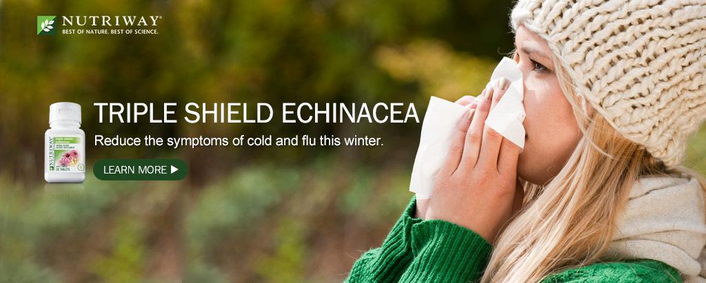 Triple Shield Echinacea